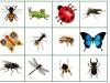 bingo-hmyz-tereza