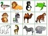 bingo-zoo-tereza