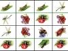 d-hmyz1...b.moravcikova.jpg