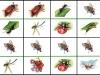 d-hmyz2...b.moravcikova.jpg
