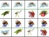 d-hmyz3...b.moravcikova.jpg