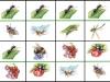 d-hmyz4...b.moravcikova.jpg