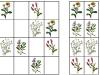 lucne-kvety4-sudoku-natalia-renckova