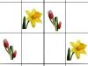 zahradne-kvety-a-tereza