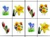 zahradne-kvety-b-tereza